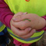 Mittarimato lapsen kädellä.