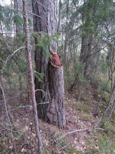 nalleistuupuussa.
