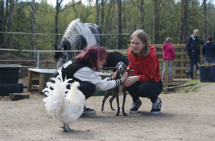 Tutuistuimme Maikkimaan kuntoutustyössä olevien eläimiin. Kuvassa Tango hevonen, Luigi koira sekä eläkeläinen kukko Tiuhti.