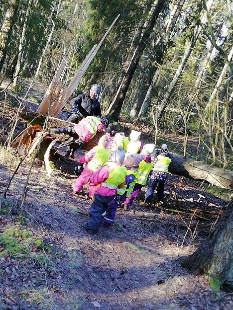 Aikuinen auttaa lapsia kiipeämään polun yli kaatuneen puunrungon yli.