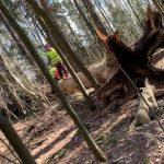 Kaksi laste tasapainoilee kaatuneen puunrungon päällä.