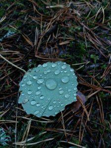 Sadepisaroita lehdellä.