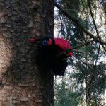 leppäkerttu-käsinukke puun oksalla korkealla