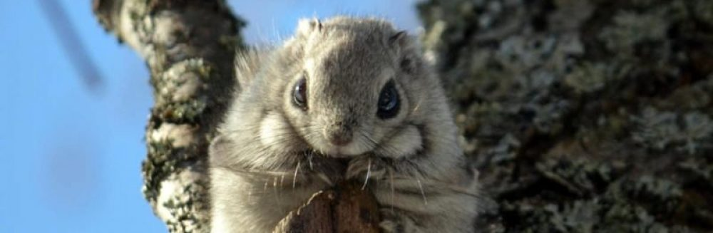 Liito-oravat- esiopetusryhmän blogi
